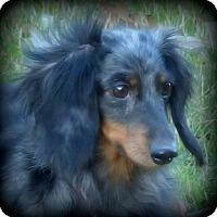 Adopt A Pet :: Jazzie - Anderson, SC