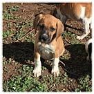 Adopt A Pet :: Jalopy