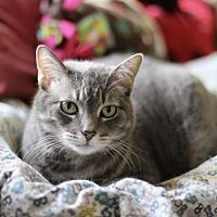 Adopt A Pet :: Macey - Fresno, CA