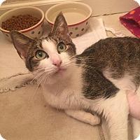 Adopt A Pet :: Pascala - Gainesville, FL