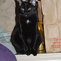 Adopt A Pet :: Nala - Surprise, AZ