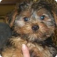 Adopt A Pet :: Max - Antioch, IL