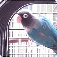 Adopt A Pet :: Jetta - Redlands, CA