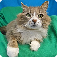 Adopt A Pet :: Tommy - East Hanover, NJ