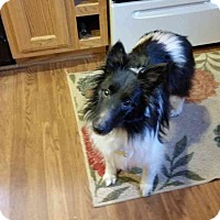 Adopt A Pet :: Cookie (Adopted) - Pittsburgh, PA