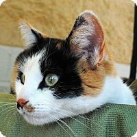 Adopt A Pet :: China - Palmdale, CA