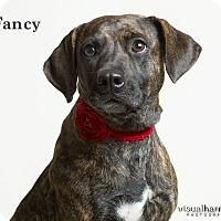 Adopt A Pet :: Fancy - Phoenix, AZ