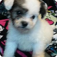 Adopt A Pet :: Oreo - East Hartford, CT