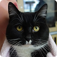 Adopt A Pet :: Oreo - Greenfield, IN