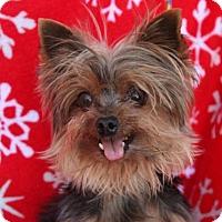 Adopt A Pet :: REMI - Red Bluff, CA