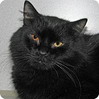 Adopt A Pet :: Swatza Katza - Ruidoso, NM