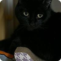 Adopt A Pet :: Joshua - Worcester, MA