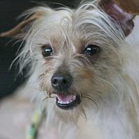 Adopt A Pet :: Wall-E - Canoga Park, CA