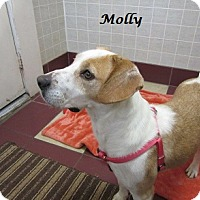 Adopt A Pet :: Molly - Bartonsville, PA