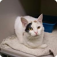 Adopt A Pet :: E-3 - Indianola, IA