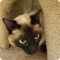 Adopt A Pet :: Mowshi - Winchester, CA