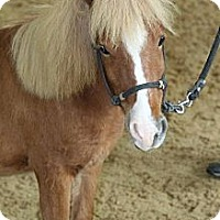 Adopt A Pet :: Dash - Hope, ME