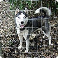 Adopt A Pet :: Kilo - Conyers, GA