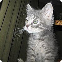 Adopt A Pet :: Pixie - Clearfield, UT