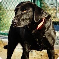 Adopt A Pet :: Daisey - Cheyenne, WY