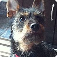 Adopt A Pet :: Rufus - Vaudreuil-Dorion, QC