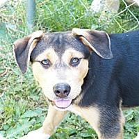 Adopt A Pet :: Genna - PENDING ADOPTION - Braintree, MA