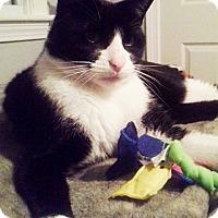 Adopt A Pet :: Zorro - N. Billerica, MA