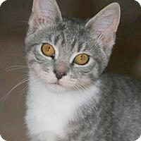 Adopt A Pet :: Sadie - Audubon, NJ