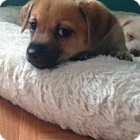 Adopt A Pet :: Sassy - Marlton, NJ