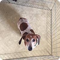 Adopt A Pet :: Moe - Marcellus, MI