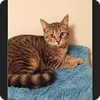 Adopt A Pet :: Cheerios - Huntington, IN