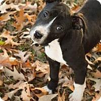 Adopt A Pet :: Danish - Greensboro, GA