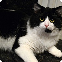 Adopt A Pet :: Fluffy - Richmond, VA