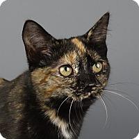 Adopt A Pet :: Zelda - Columbia, IL