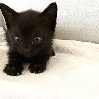 Adopt A Pet :: Pandora - Christiansted, VI