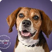 Adopt A Pet :: Max - Toronto, ON