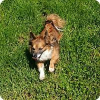 Adopt A Pet :: Tyson - Lodi, CA