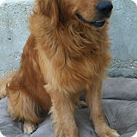 Adopt A Pet :: Alex - Washington, DC