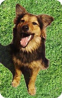 German Shepherd Dog Mix Puppy for adoption in El Cajon, California - PETE