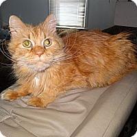 Adopt A Pet :: Apricot - Riverhead, NY