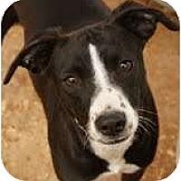 Adopt A Pet :: Page - Staunton, VA