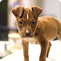 Adopt A Pet :: Marge - Sacramento, CA