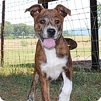 Adopt A Pet :: Judy--Reduced fee $300 - Foster, RI