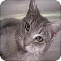 Adopt A Pet :: Sicily - Phoenix, AZ