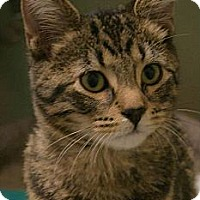 Adopt A Pet :: Javier - Chicago, IL