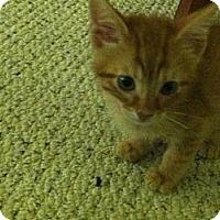 Adopt A Pet :: Eli - Shavertown, PA