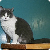 Adopt A Pet :: Milly - Dover, OH
