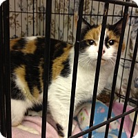 Adopt A Pet :: Jessica - Byron Center, MI