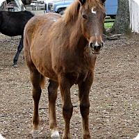 Adopt A Pet :: Emmy Lou - El Dorado Hills, CA