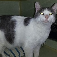 Adopt A Pet :: Sawyer - Iroquois, IL